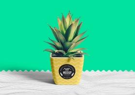 Free Flower Pot Mockup