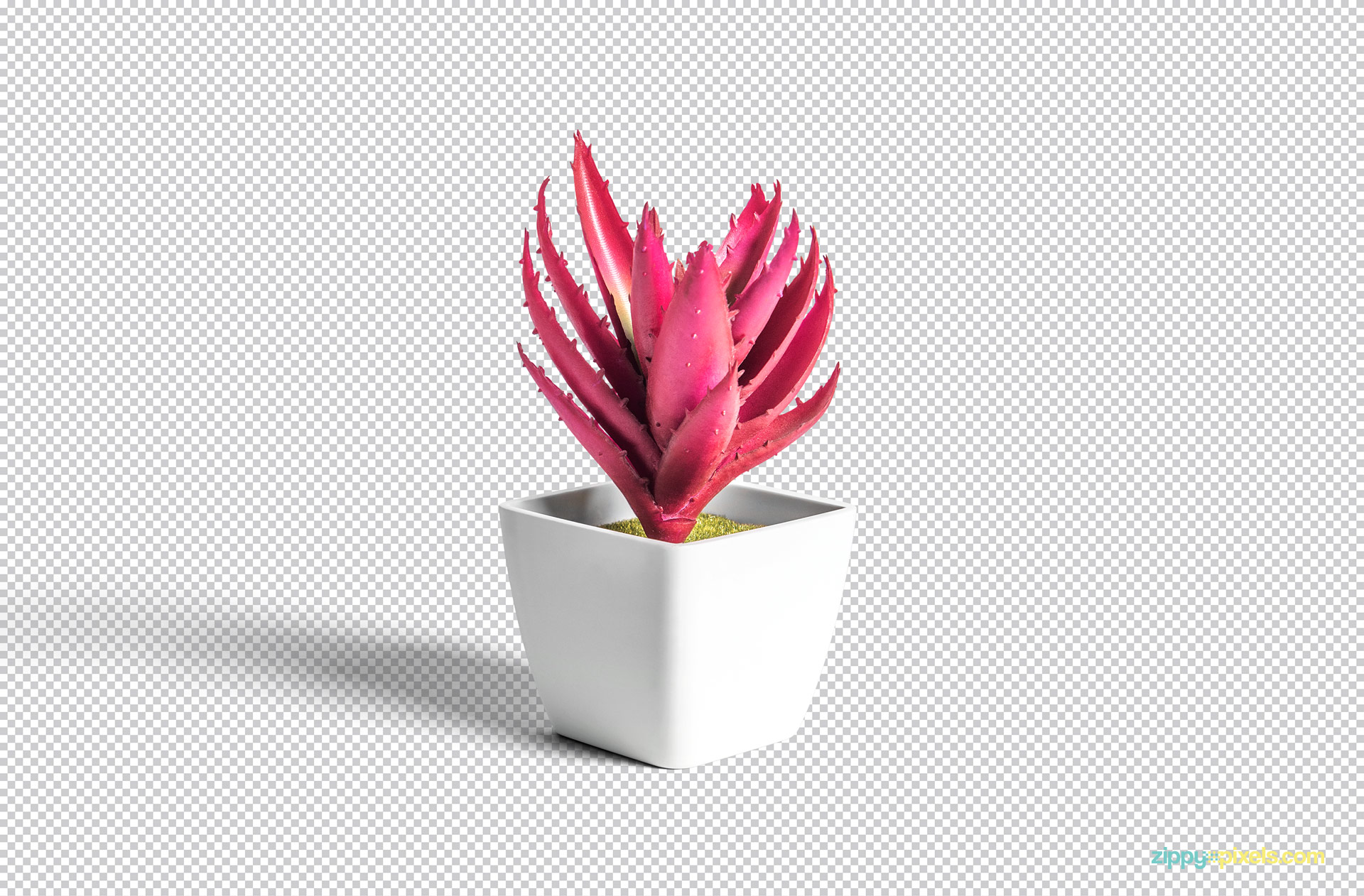 Use Adobe Photoshop for the editing of the plant pot PSD.